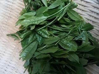 日本茶ノ生餡?緑茶彩米?緑茶を食べるとどんな効果があるの?