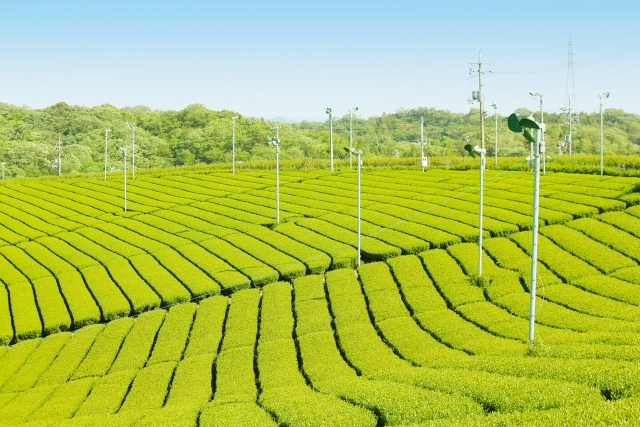 ユネスコ無形文化遺産に日本茶を!大切な日本の文化を守ろう。
