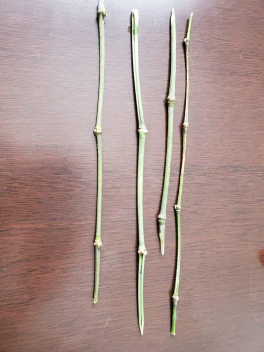 細い竹たち