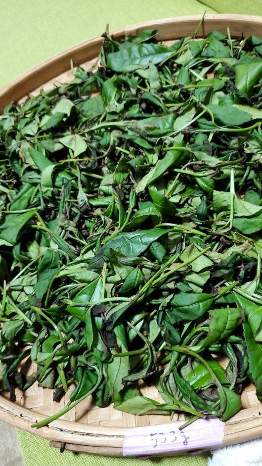 揺青後の葉