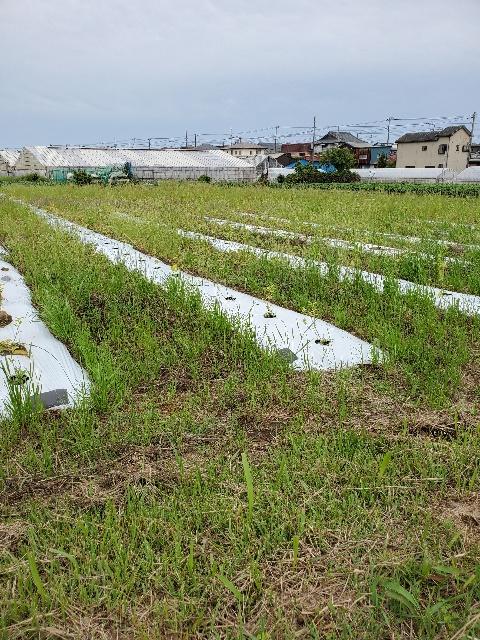 ぼーぼー畑